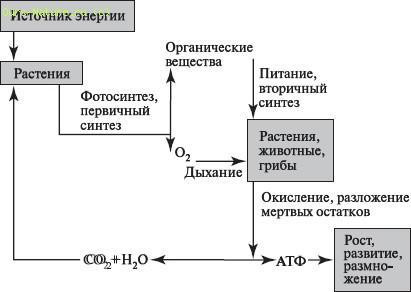 Гетеротрофные и автотрофные клетки особенности их обмена веществ