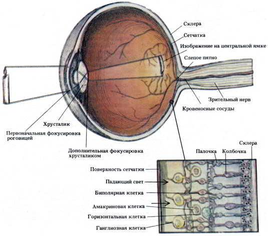 Лазерное лечение зрения в казани