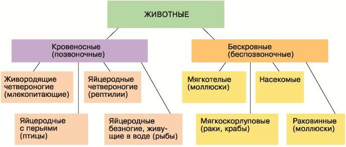 Система органической природы к линнея доклад 5731