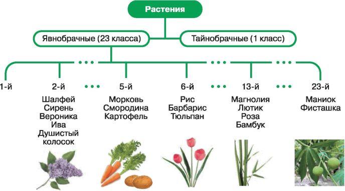 Система органической природы к линнея доклад 4114