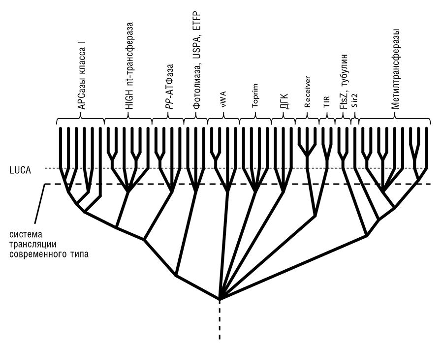 Флавопротеин фото