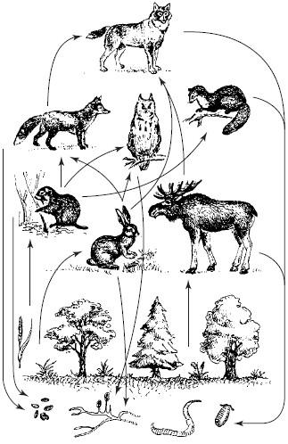 Пищевая цепь в природе картинки