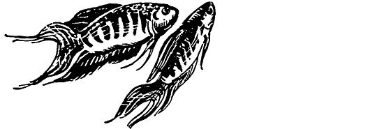 подводный мир в комнате полканов ф в цвете скачать