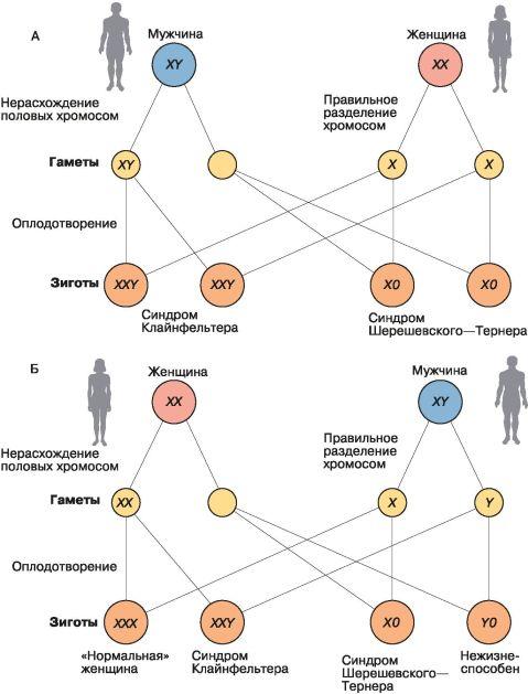 Реферат генетика и здоровье 5759