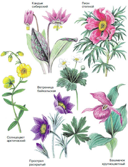 Картинки растений красной книги с названиями
