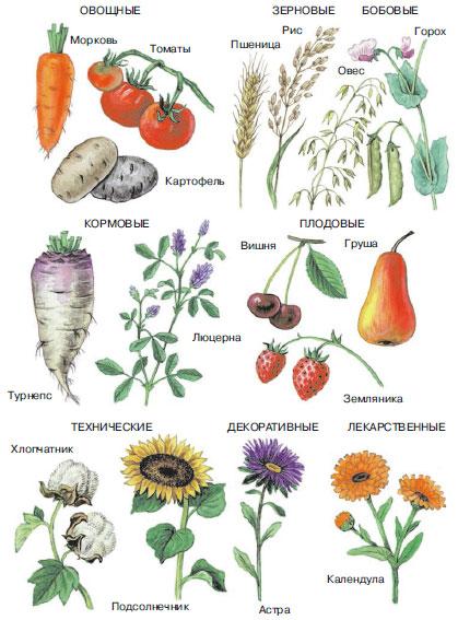 Культурные Растения Фото С Названиями культурные растения фото с названиями
